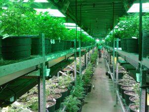 Sessions-Department-of-Justice-Marijuana-300x225